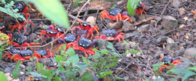 Les petits crabes, par Lilie