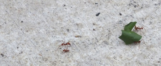 Les mosus de fourmis!