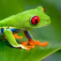 20 faits intéressants sur les Costaricains!