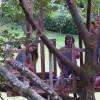 Vous avez déjà essayé un canopy au Costa Rica?