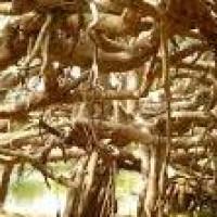 Un arbre généalogique qui tourne en rond!
