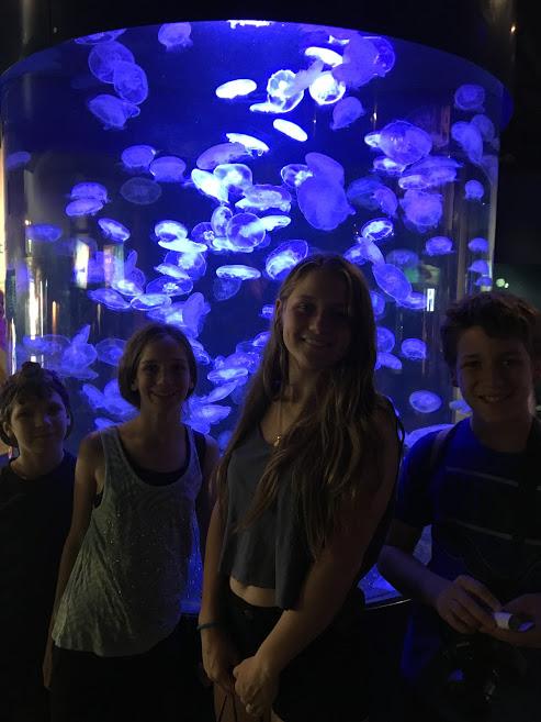Vancouver: Stanley Park et Aquarium